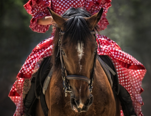 Motiviertes und lockeres Pferd durch Schulterherein