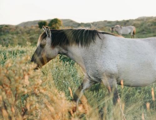 Wie lernen Pferde?