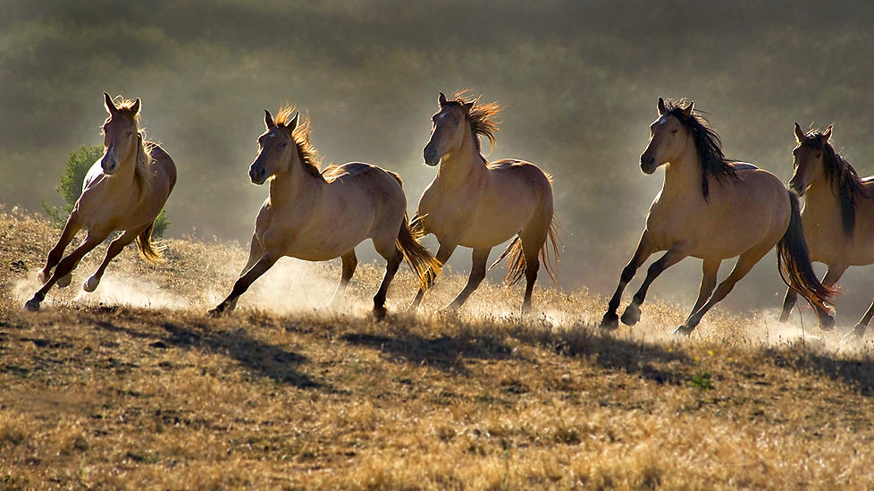 3 unglaubliche Pferdegeschichten